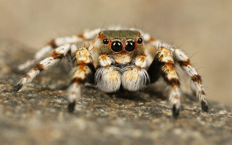 Soñar con arañas
