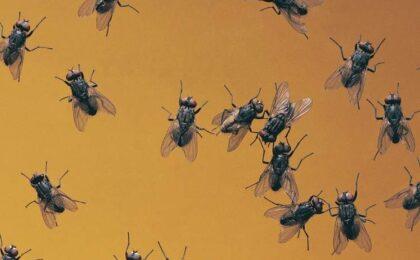 moscas significado